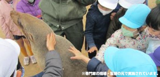杉戸白百合にて移動動物園 毎日新聞掲載
